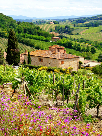 tuscan house: View through vineyards with stone house, Tuscany, Italy   Stock Photo