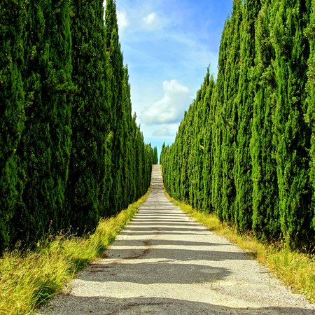 val dorcia: Looking down a long cypress lined street in Tuscany, Italy