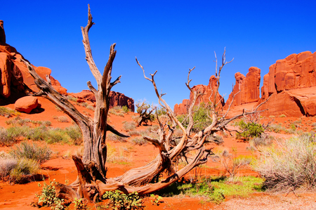 Arches National Park, USA, view of Park Avenue with dead wood photo