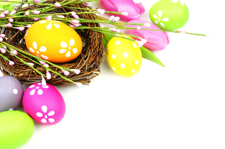 Easter eggs and nest with tulips forming a corner border over white photo