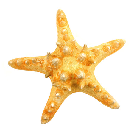 five star: Single star fish isolated on a white background