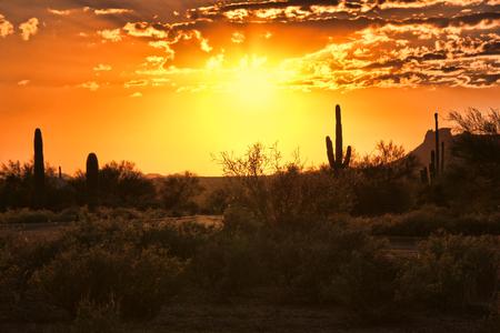 アリゾナ州の砂漠の美しいサンセット ビュー
