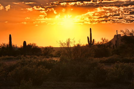 state of arizona: Beautiful sunset view of the Arizona desert