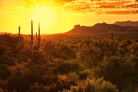 アリゾナ州の砂漠の夕景
