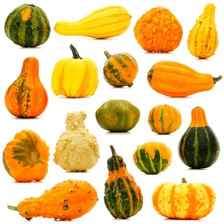 cucurbita: Large group of unique isolated autumn gourds