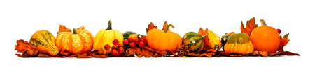 pumpkin leaves: Border of autumn leaves, pumpkins and vegetables over white