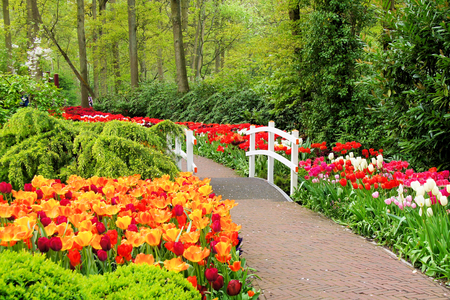 Walkway through spring flowers at Keukenhof Gardens Netherlands Foto de archivo