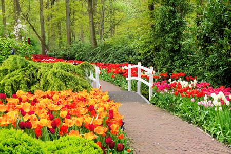Walkway through spring flowers at Keukenhof Gardens Netherlands Stockfoto