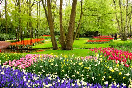 カラフルな春のチューリップとオランダのキューケンホフ公園の花 写真素材