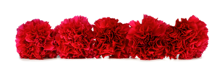 Border arrangement of red carnation flowers over a white background Zdjęcie Seryjne