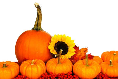 autumn arrangement: Autumn arrangement of pumpkins leaves berries and sunflowers isolated on white Stock Photo