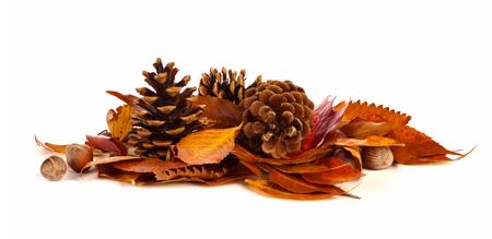 Stapel van de herfst bladeren dennenappels en noten op een witte achtergrond