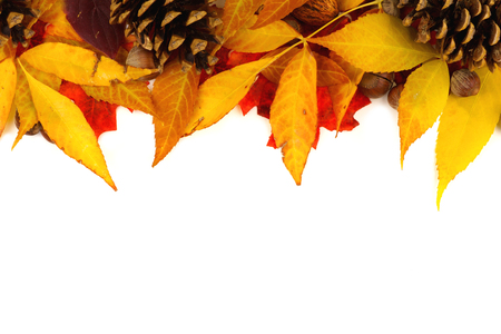 edge: Autumn border of colorful leaves and pine cones isolated on a white background Stock Photo