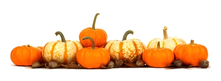 Long border arrangement of varied autumn pumpkins isolated on a white background