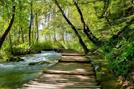 Boardwalk through the lush water landscape of Plitvice Lakes National Park, Croatia