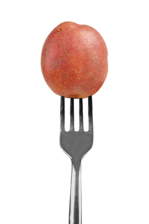 starchy food: Small red potato on a fork isolated on a white background Stock Photo