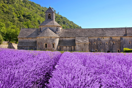 abbey: Beautiful Senanque Abbey behind fields of lavender, Provence, France Stock Photo