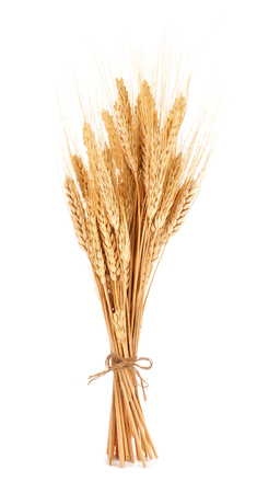Bundle of wheat tied with twine isolated on a white background