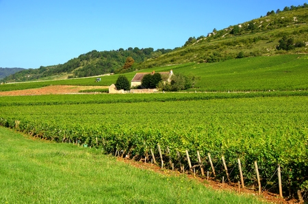 Stone house among the green vineyards of Burgundy, France Stock Photo