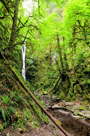 Waterfall seen through the green rainforests of Goldstream Provincial Park, Vancouver Island, Canada