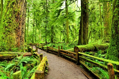 Trail through old growth forest at Cathedral Grove, Vancouver Island, BC, Canada Stock Photo