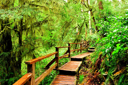 Wooden trail through the rainforests of Pacific Rim National Park, Vancouver Island, BC, Canada