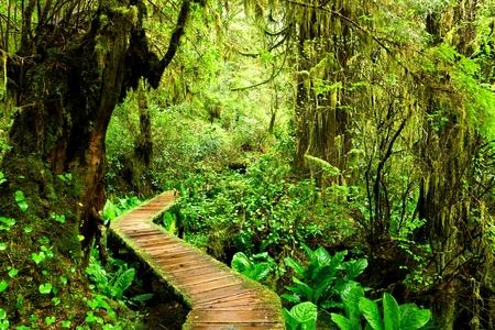 こけむした熱帯雨林、バンクーバー島、ブリティッシュ コロンビア、カナダのパシフィック ・ リム国立公園から遊歩道歩道 写真素材