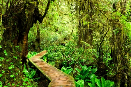 Boardwalk trail through the mossy rainforests of Pacific Rim National Park, Vancouver Island, BC, Canada Imagens