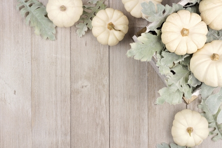 Autumn corner border of white pumpkins and silver leaves over a rustic light gray wood background