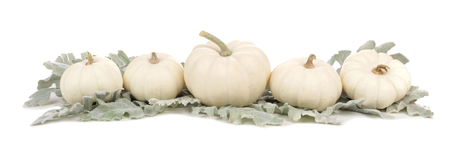 Autumn border arrangement of white pumpkins and silver leaves isolated on a white background Stock Photo