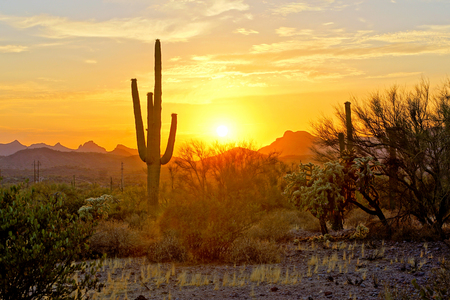 Sunset view of the Arizona desert with Saguaro cacti and mountains Banco de Imagens