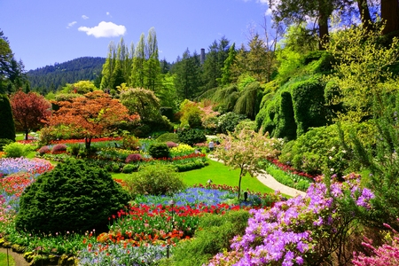 Butchart Gardens, Victoria, Canada. View of the colorful flowers of the sunken garden during spring.