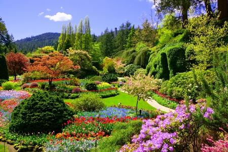 Butchart Gardens, Victoria, Kanada. Ansicht der bunten Blumen des versunkenen Gartens während des Frühlinges. Standard-Bild
