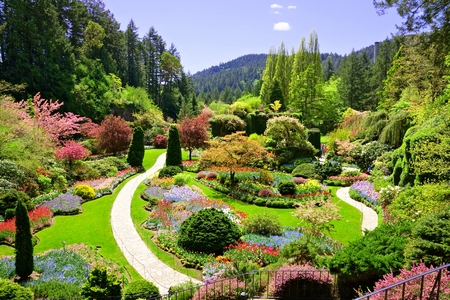 Butchart Gardens, Victoria, Canada. View over the colorful flowers of the sunken garden at springtime.