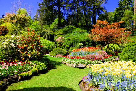 Butchart gardens victoria canada colorful flowers of the sunken butchart gardens victoria canada colorful flowers of the sunken garden during spring thecheapjerseys Image collections