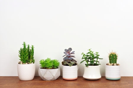 Group of various potted cacti and succulent plants in a row. Side view on wood shelf against a white wall. 스톡 콘텐츠