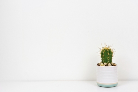 Indoor cactus plant in a white pot. Side view on white shelf against a white wall. Copy space. 스톡 콘텐츠