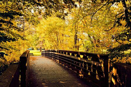 Footbridge though vibrant yellow autumn leaves in the Niagara region of Ontario, Canada