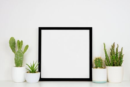 Mock up black square frame with potted cacti and succulent plants on a shelf against a white wall Archivio Fotografico
