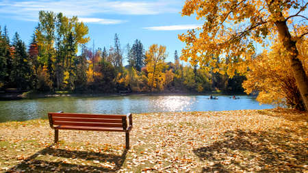 Park bench beside a lake during autumn with vibrant yellow colors