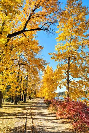 Train tracks through vibrant yellow autumn foliage on a bright sunny fall day