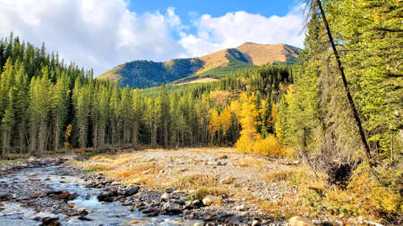 Stream through the Canadian Rocky Mountains during fall with warm autumn colors