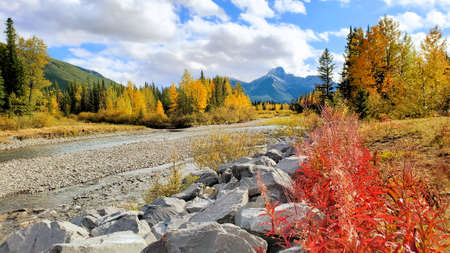 River through the Canadian Rocky Mountains during autumn with colorful fall foliage Banco de Imagens