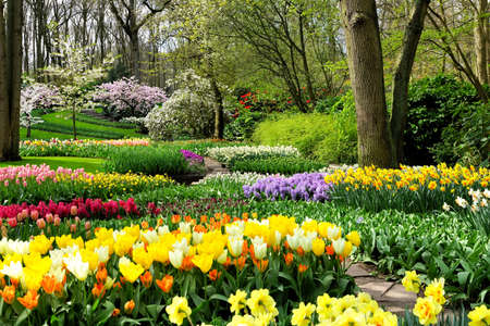 Colorful spring flowers in the beautiful landscaped gardens of Keukenhof