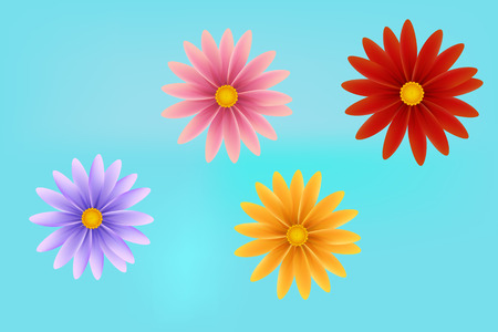 Realistic flower vector Daisy flower,chamomile with petals.