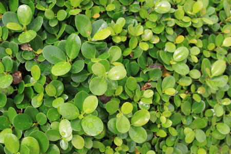 leafs: leafs close up