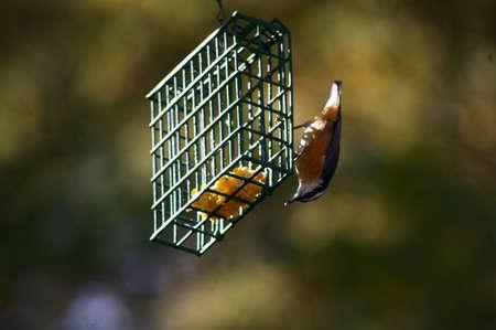 Vogel an der Zufuhr