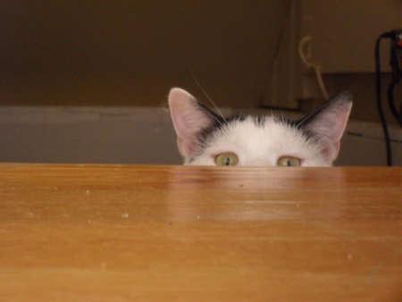 Curious Cat Eyes
