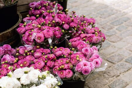 Pink mum flowers for sale at a market in Copenhagen, Denmark