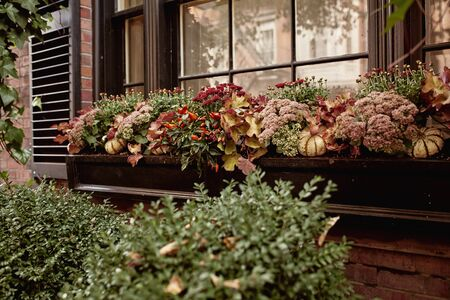 Detail of brownstone exterior with floral planters against a window in the historic neighborhood of Beacon Hill in Boston, Massachusetts.